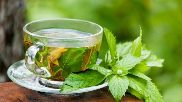 خرید عمده چای سبز