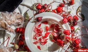 پخش انواع چایی ترش ایرانی